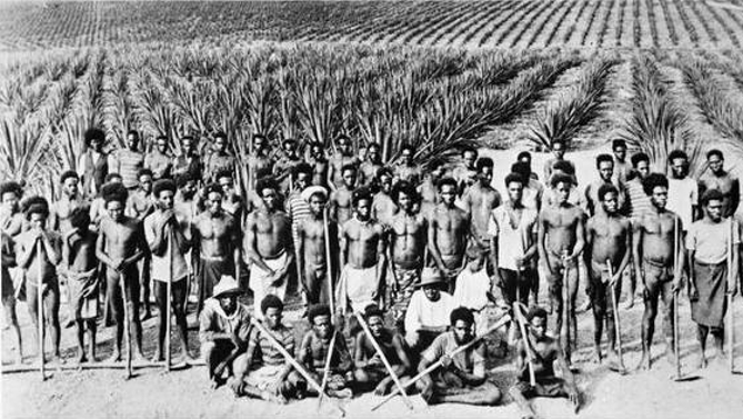 Pacific islander labourers on a Queensland pineapple plantation, 1890s. Image: Creative Commons / public domain via Wikipedia